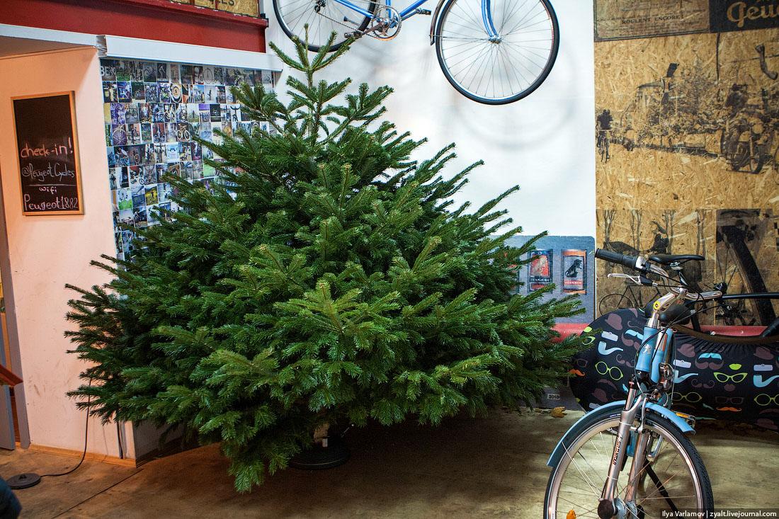 Кто продавал елки перед новым годом отзывы
