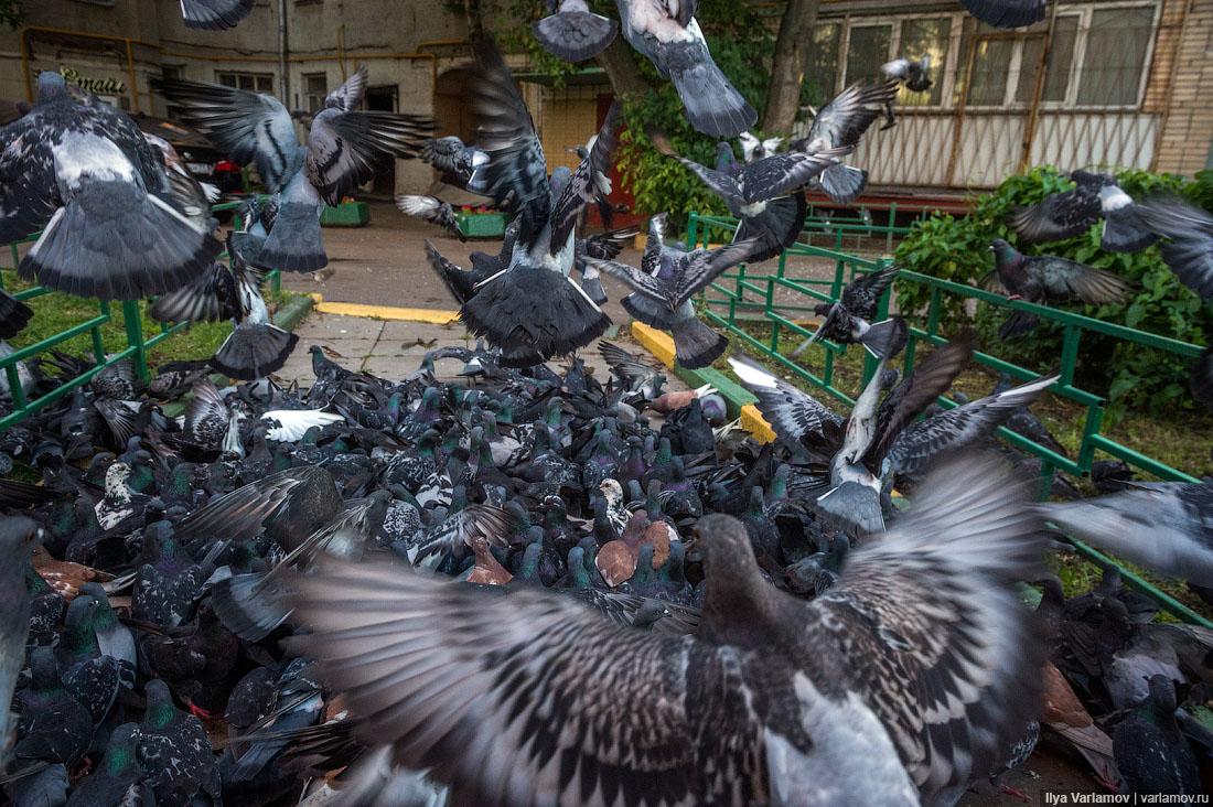 ВМагадане ввели штрафы закормление птиц