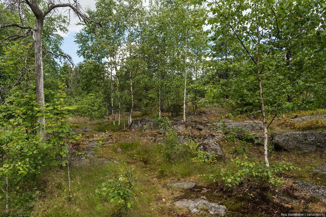 Обоссали лес