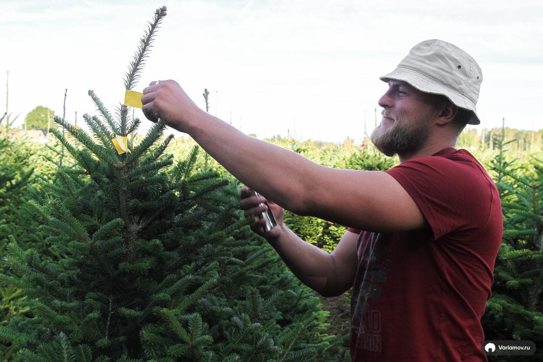 Какая елка лучше: живая или искусственная?