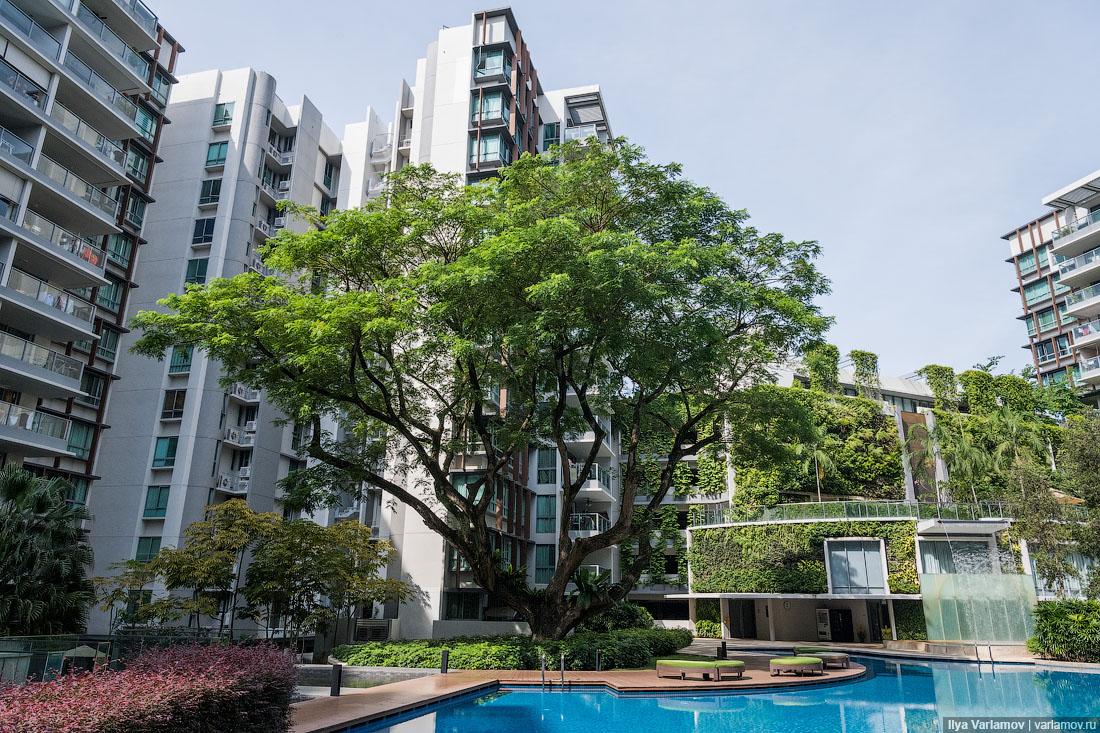 фибра для новостройки в сингапуре фото квартир большой