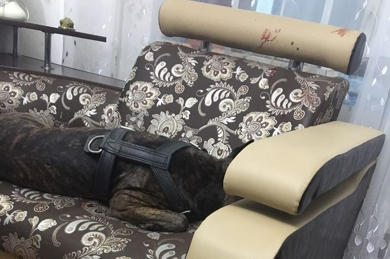 In Noyabrsk, police broke into the apartment of a witness in a criminal case and shot his dog a dog, Yevgeny, an apartment, Yevgeny, said February, the door, the policemen stealing, engaging, the owner, the owner, the employees, the TV, witnessed Noyabrsk police