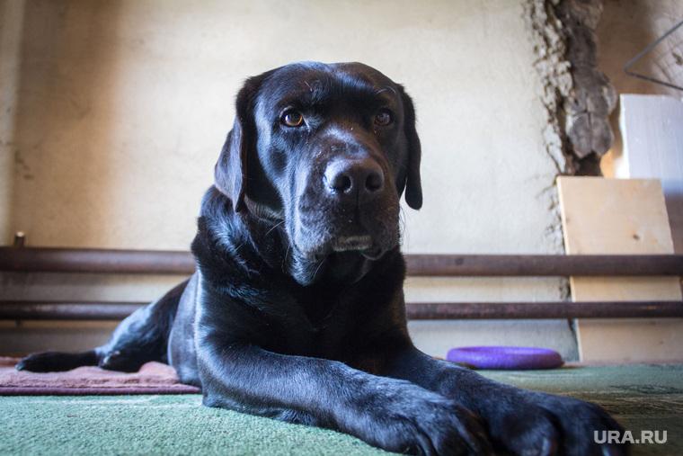 В Ноябрьске полицейские ворвались в квартиру свидетеля по уголовному делу и застрелили его собаку