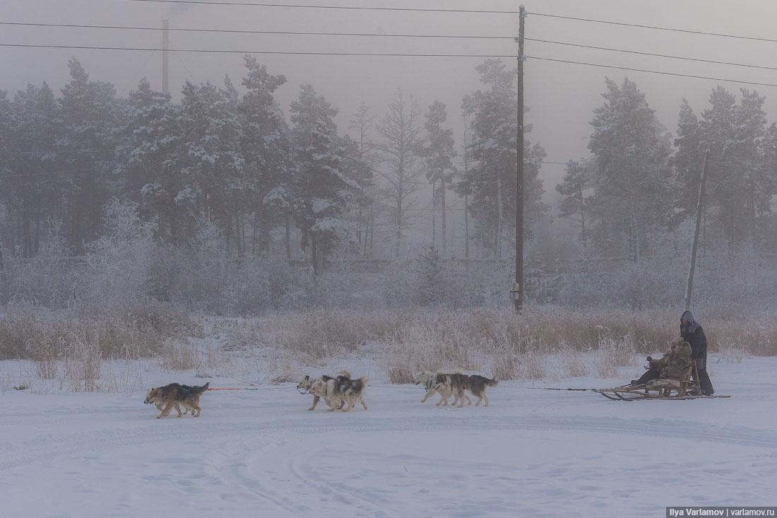 Нормально ли убивать волков?