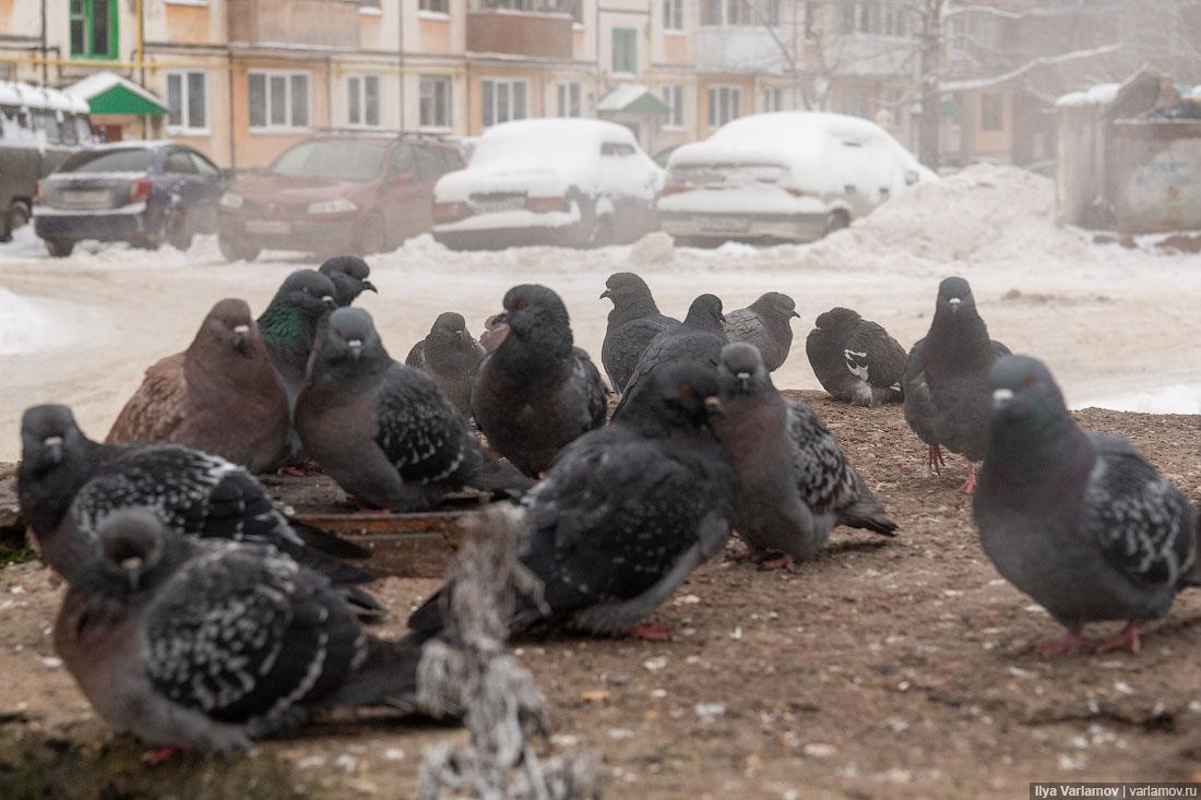 Сыктывкар: город, где опасно ходить зимой пешком