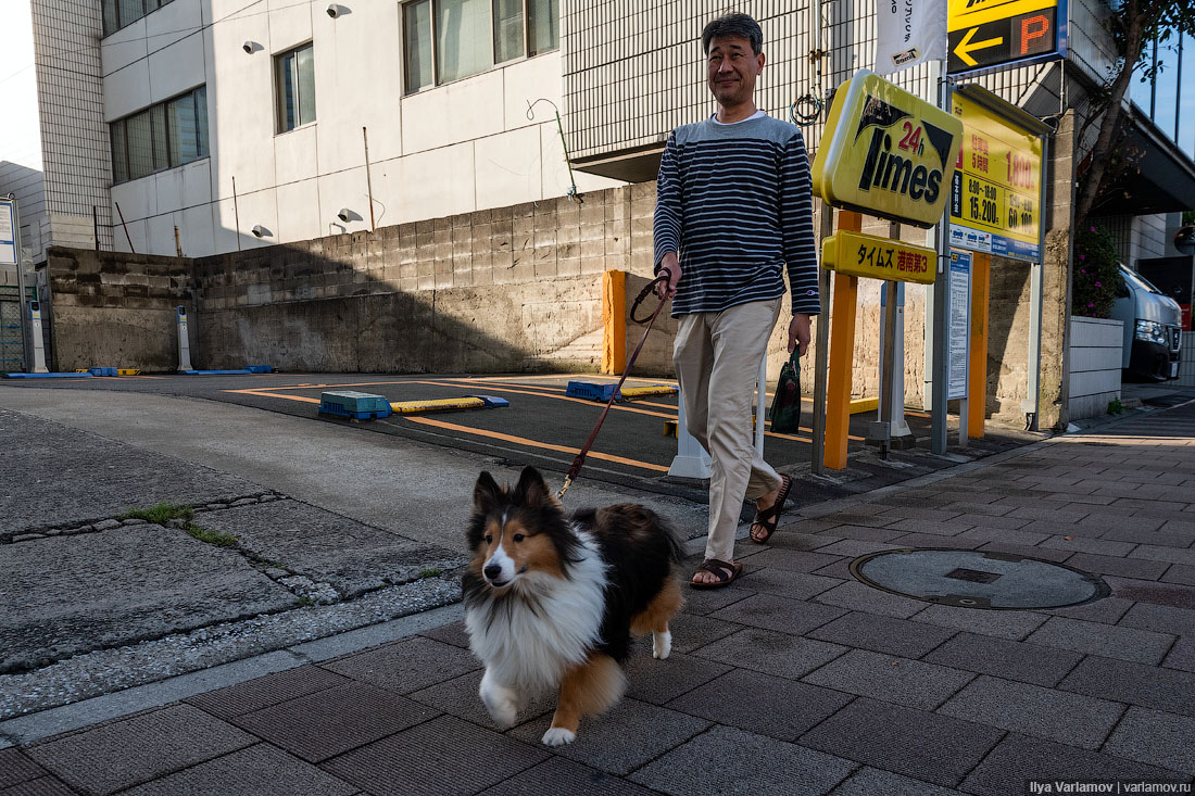 Чем заняться в Токио: аукцион тунца, поезда, храмы и Радужный мост