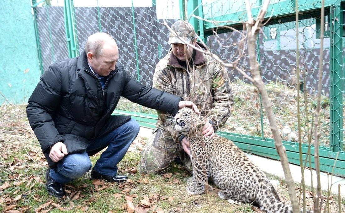 Геноцид леопардов на Кавказе