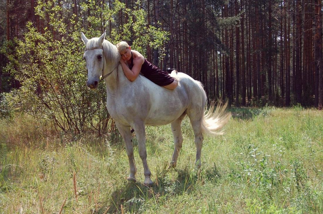 Хрупкая жизнь животных манеж, санаторий, Чувашия, Конный, лошадей, рысистая, животных, может, орловская, другой, бойню, зоопарк, будет, попадут, могут, «Чувашия», просто, продаёт, цирках, зоопарках
