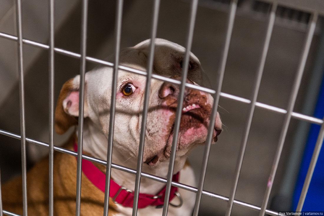 Лагерь смерти домашних животных