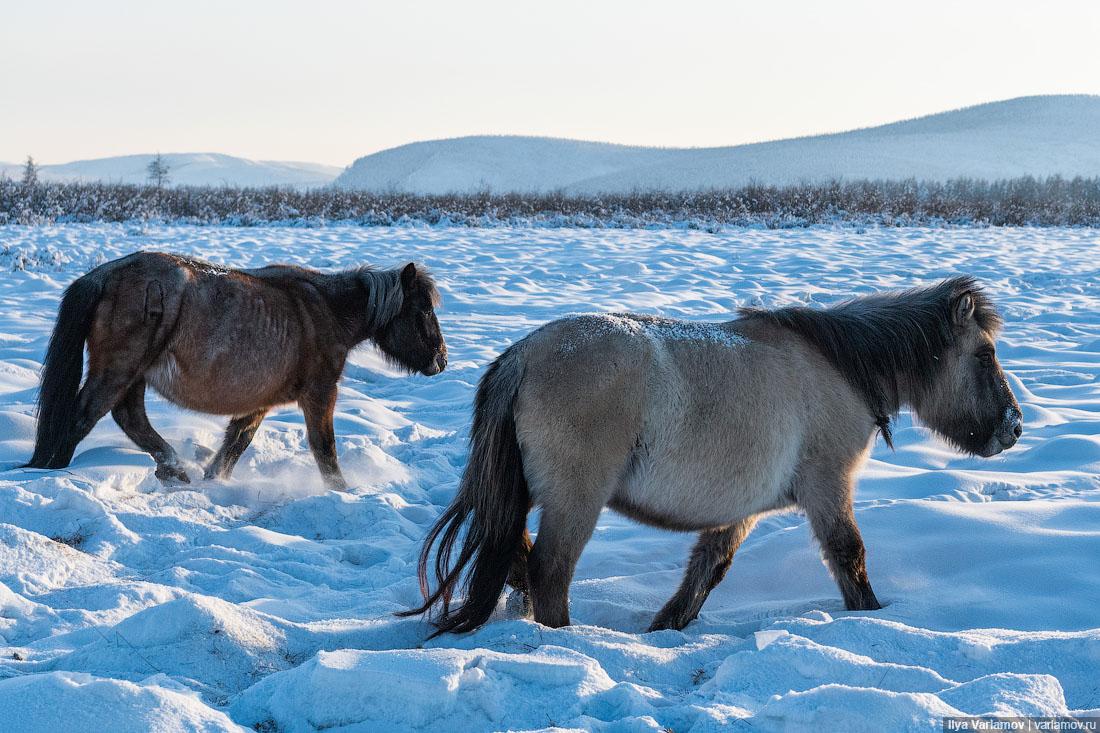 Оймякон, Якутия: здесь живут люди в минус 60 Томторе, холода, Оймяконе, температура, Оймякон, человек, самом, лагерей, самолёт, аэропорт, февраля, прямо, просто, Оймякона, зимой, около, километров, туристов, лошади, место