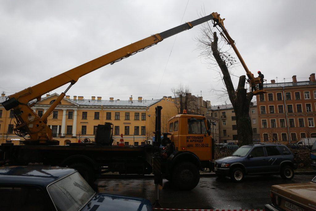В Петербурге опять уничтожают деревья