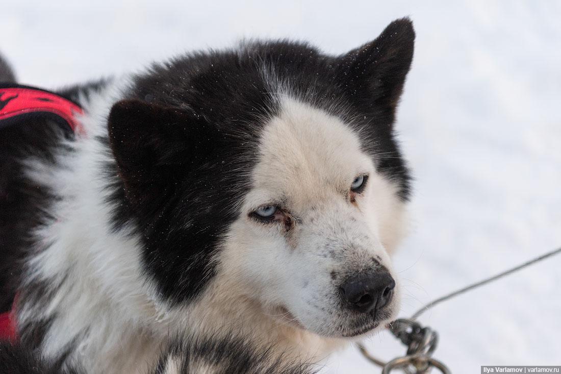 Якутия для якутов! потому, против, преступление, Якутии, должны, якутские, якуты, Когда, работать, совершил, якутский, глава, мигрантов, только, Киргизии, говорят, половой, тогда, киргиз, можно