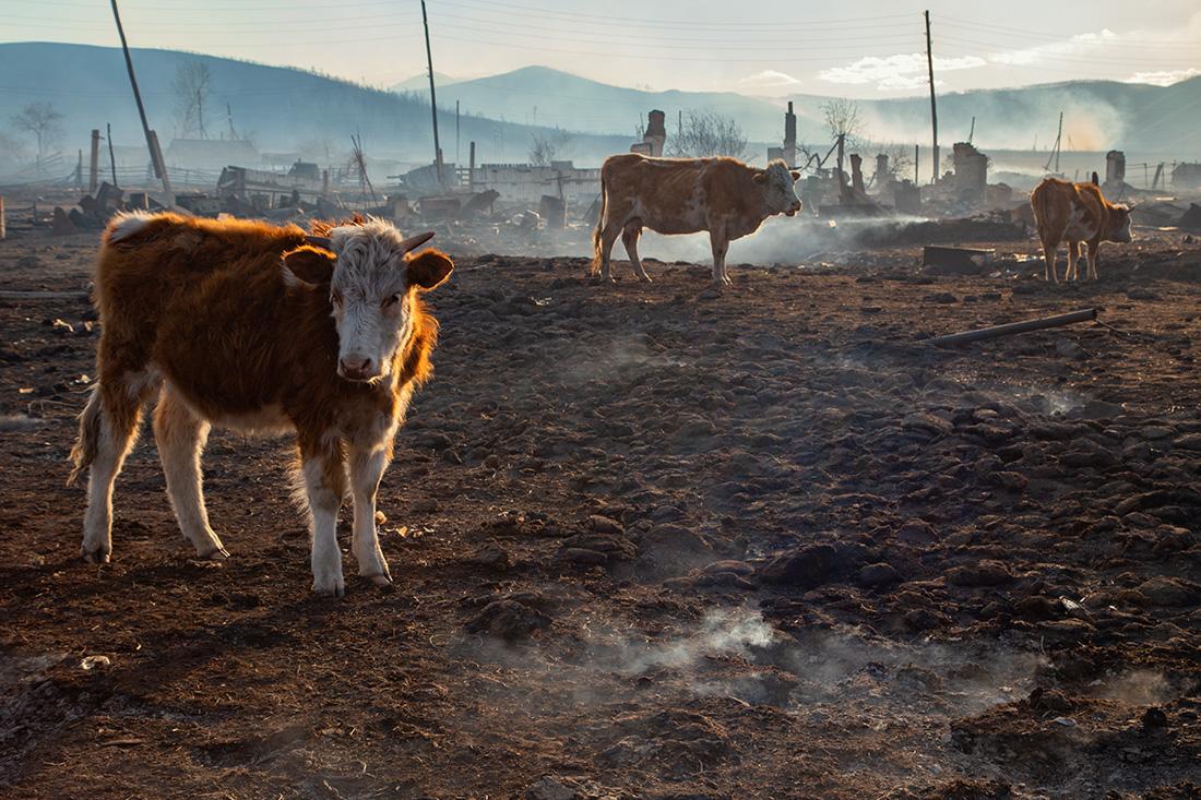 Лесные пожары в Забайкалье (18+)