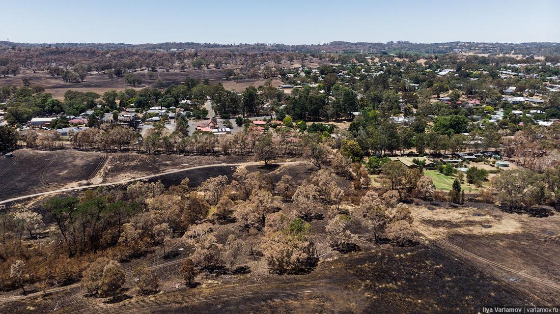 Выжженная земля и трупы животных - фото 2
