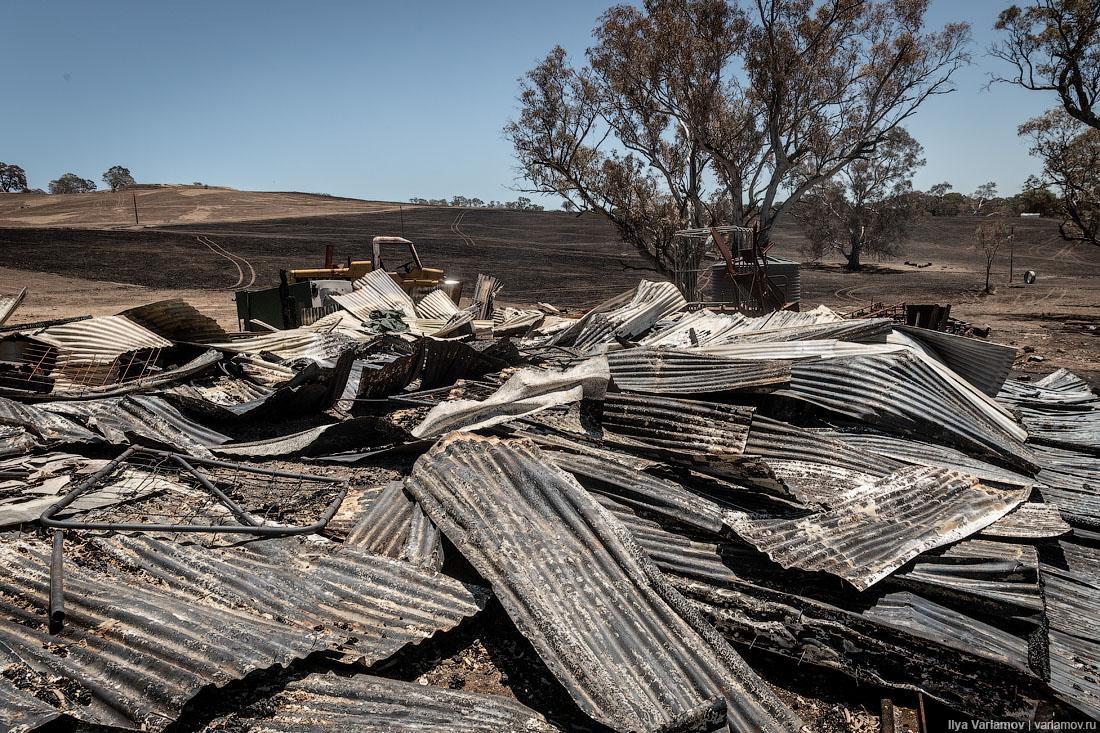 Выжженная земля и трупы животных - фото 3