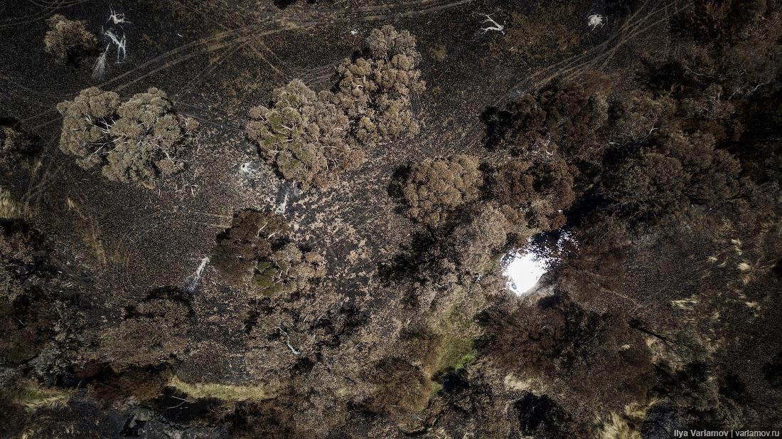 Выжженная земля и трупы животных - фото 4