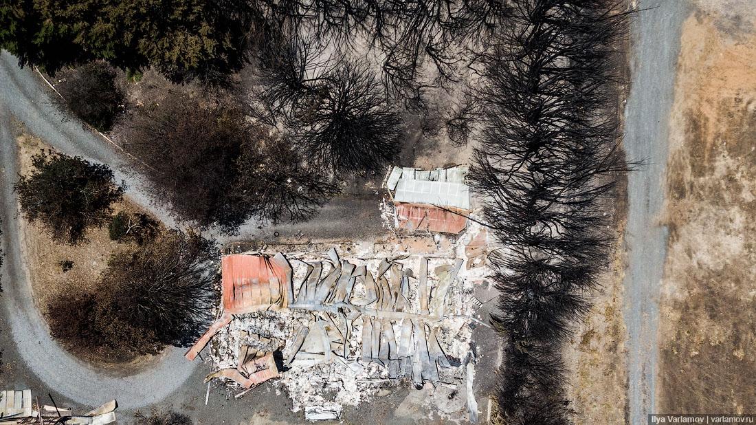 Выжженная земля и трупы животных - фото 5