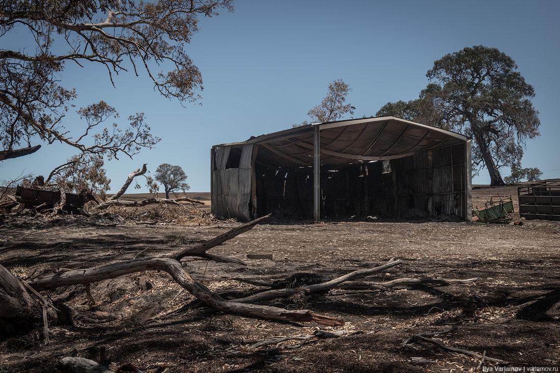 Выжженная земля и трупы животных - фото 6