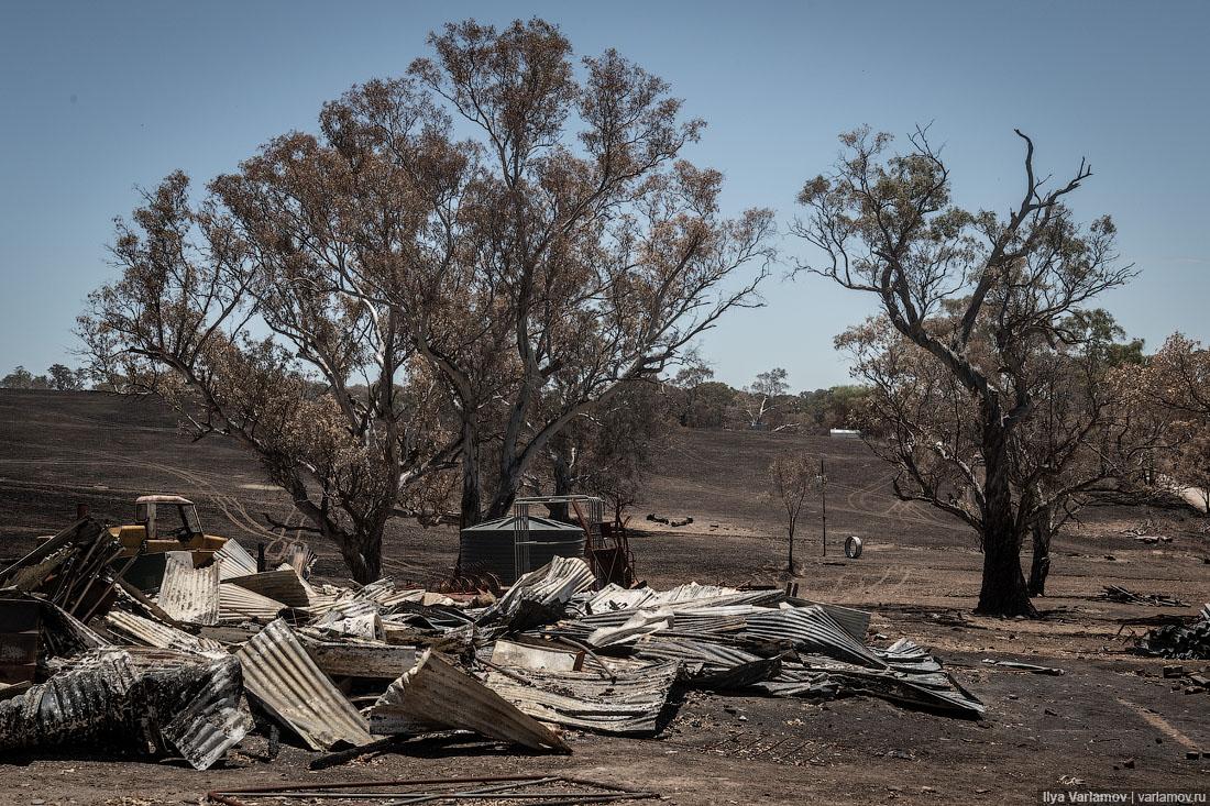 Выжженная земля и трупы животных - фото 8