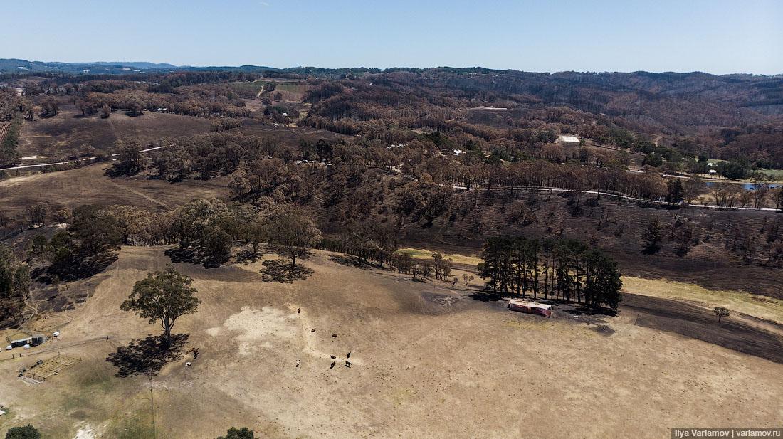 Выжженная земля и трупы животных - фото 10