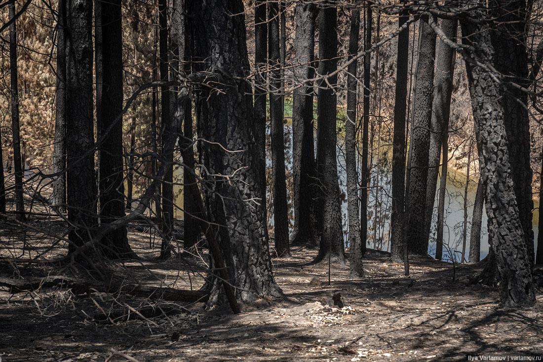 Выжженная земля и трупы животных - фото 11