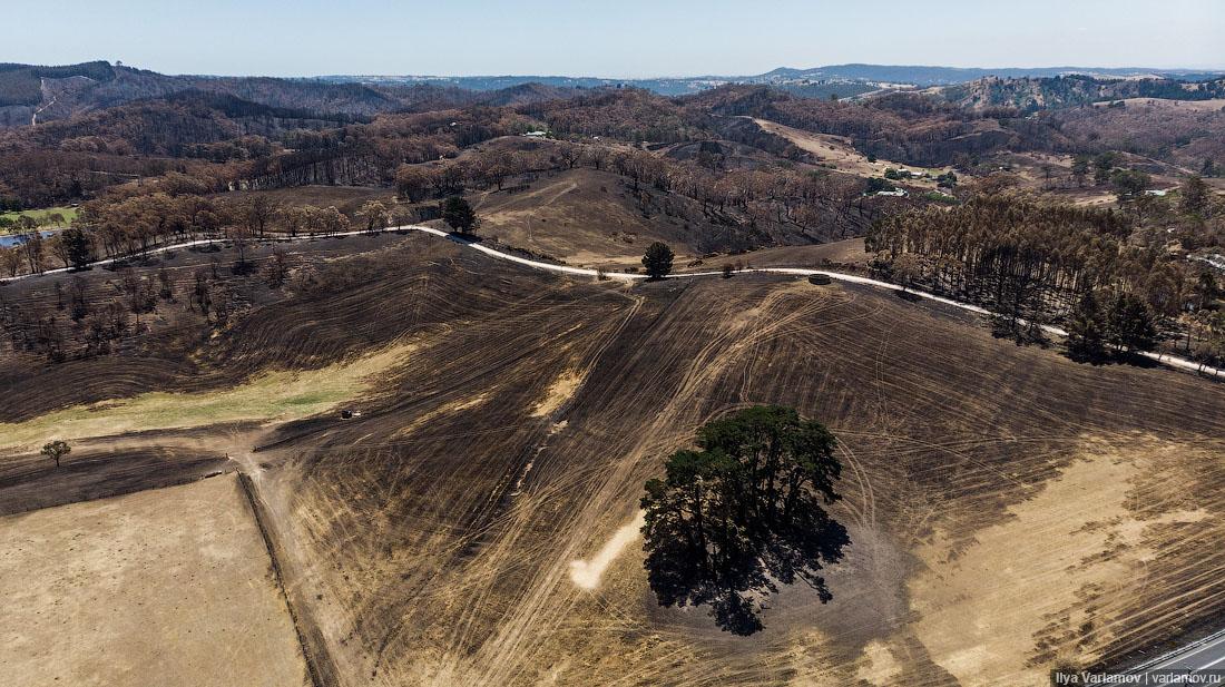 Выжженная земля и трупы животных - фото 12