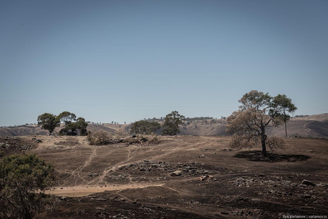 Выжженная земля и трупы животных - фото 13