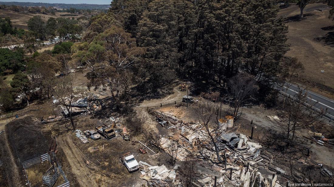 Выжженная земля и трупы животных - фото 14