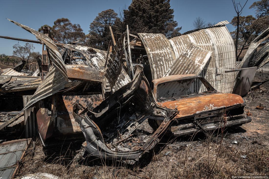 Выжженная земля и трупы животных - фото 15