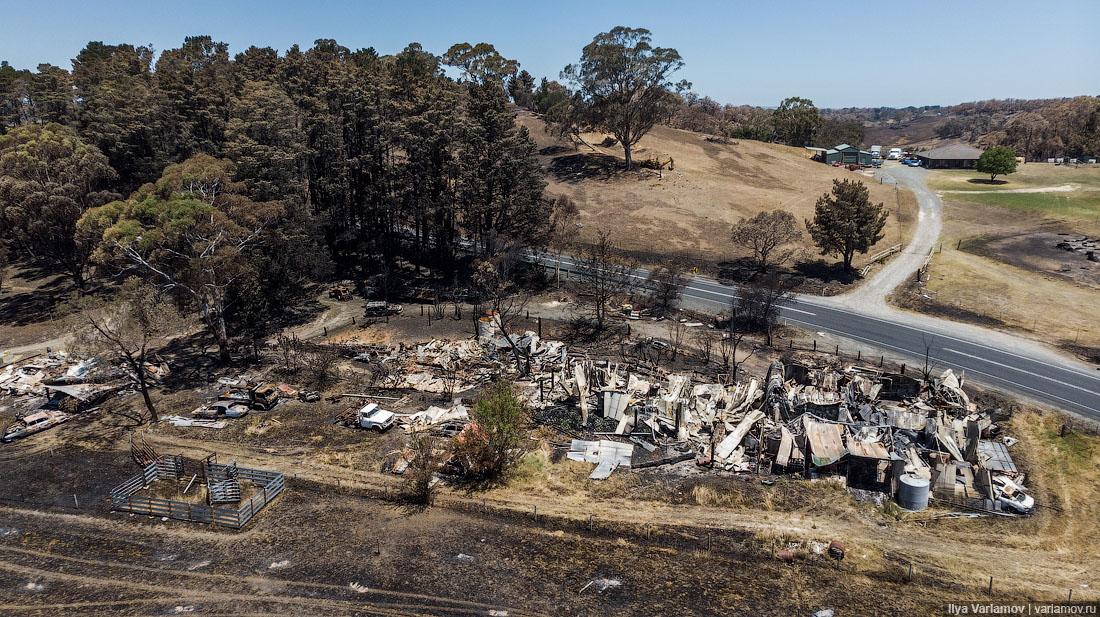 Выжженная земля и трупы животных - фото 16