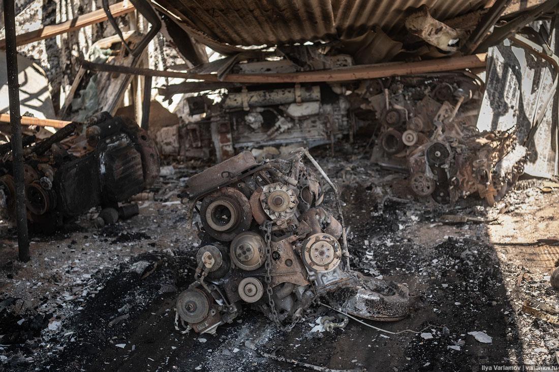Выжженная земля и трупы животных - фото 17