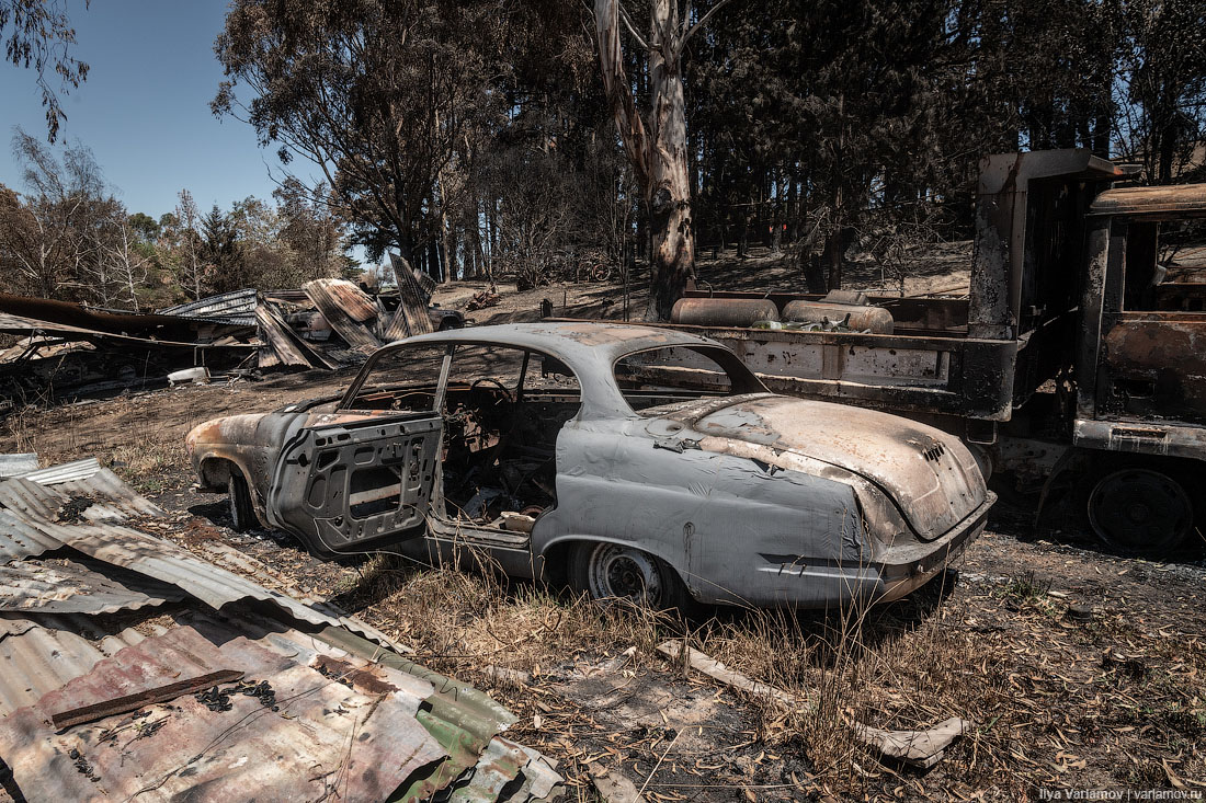 Выжженная земля и трупы животных - фото 18
