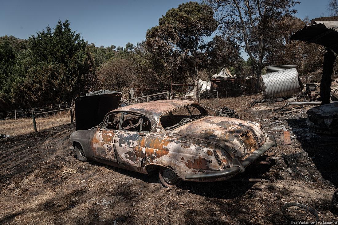 Выжженная земля и трупы животных - фото 20
