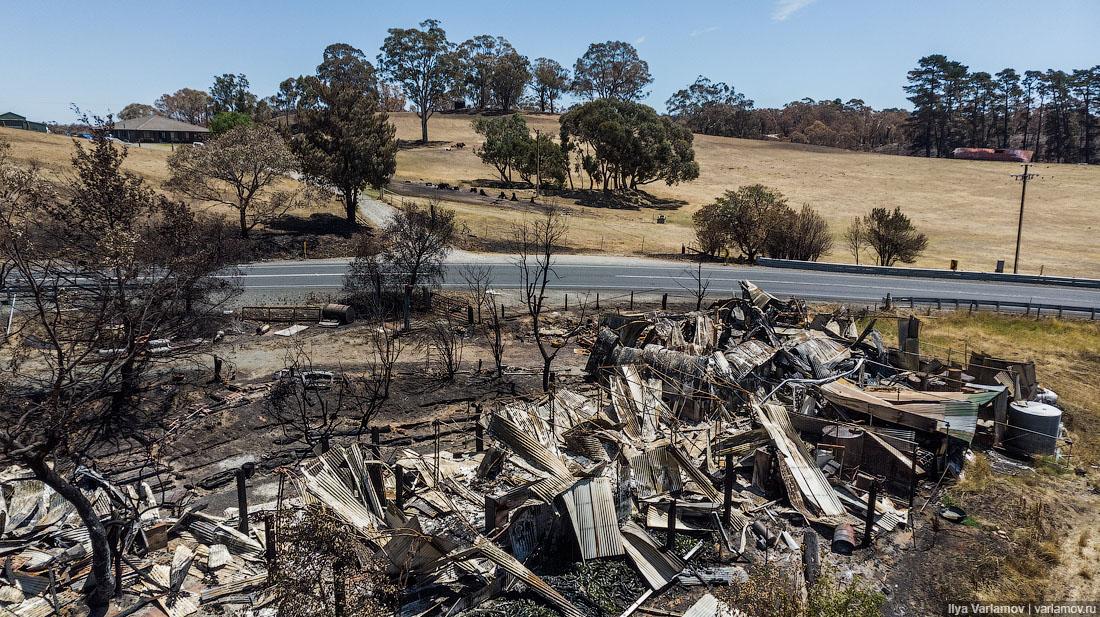 Выжженная земля и трупы животных - фото 21
