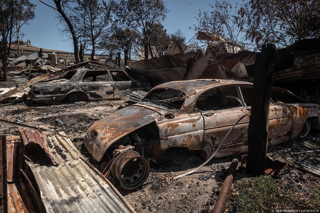 Выжженная земля и трупы животных - фото 25
