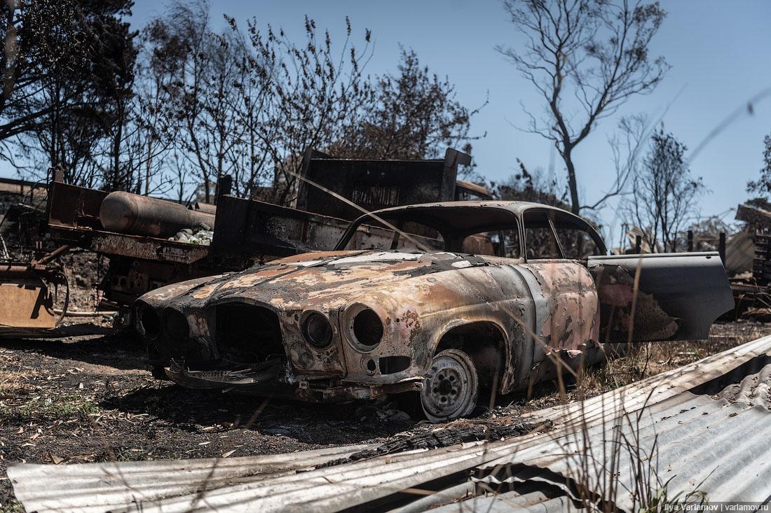 Выжженная земля и трупы животных - фото 26