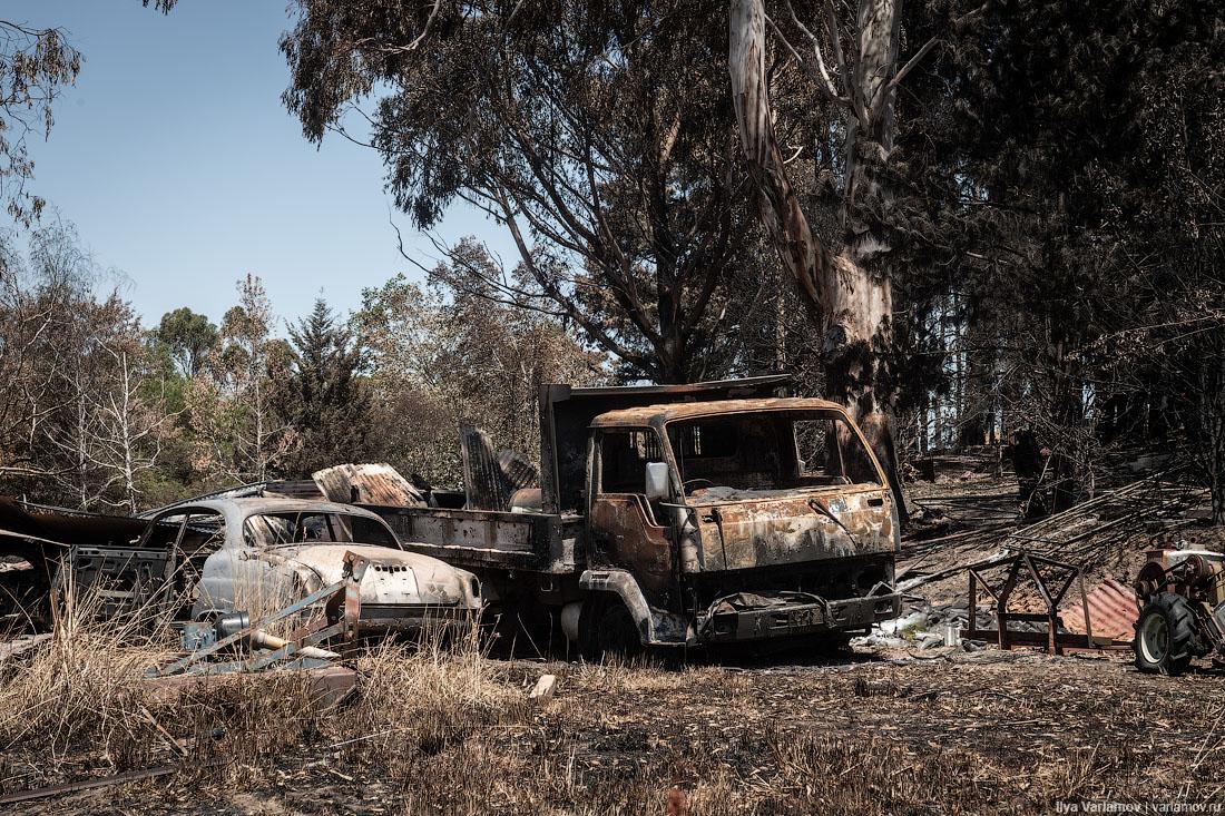 Выжженная земля и трупы животных - фото 28