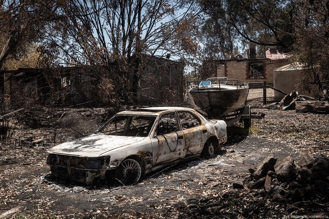 Выжженная земля и трупы животных - фото 29