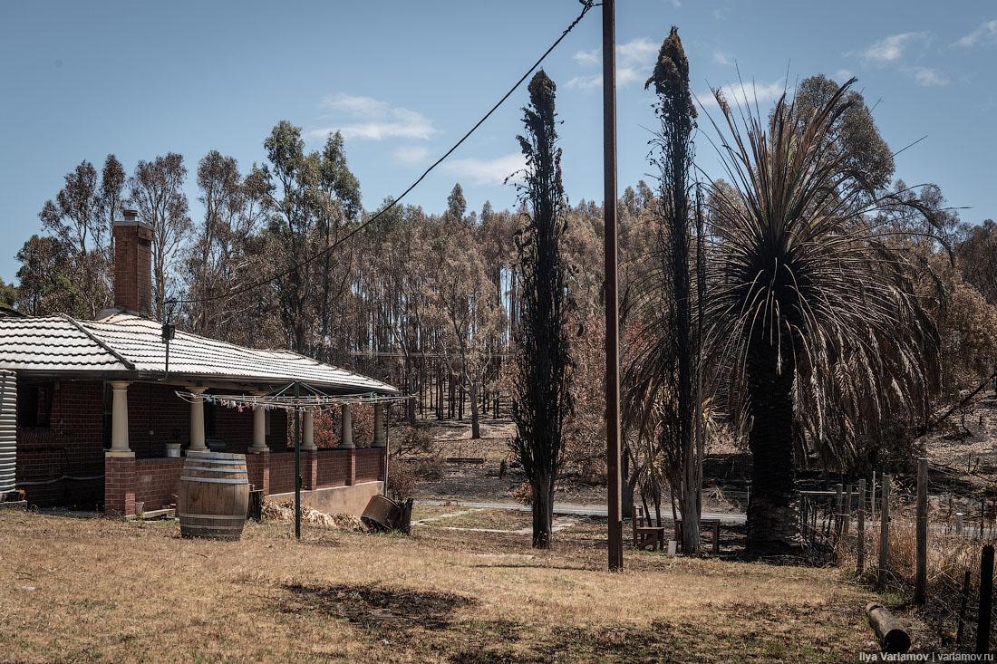 Выжженная земля и трупы животных - фото 30