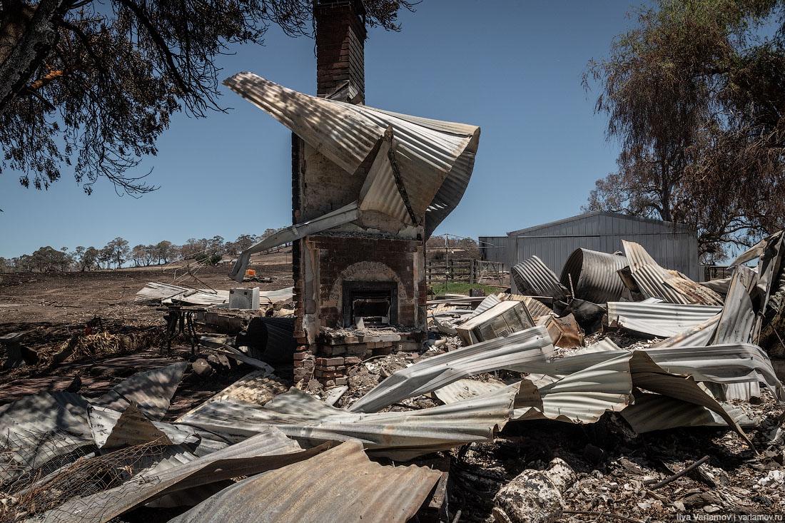 Выжженная земля и трупы животных - фото 31