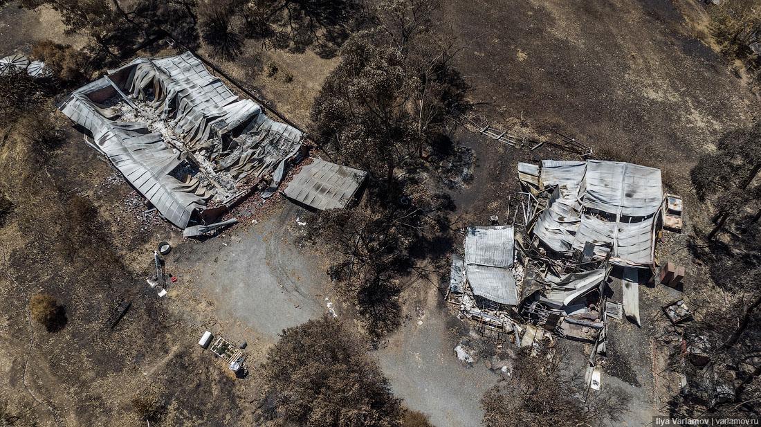 Выжженная земля и трупы животных - фото 32