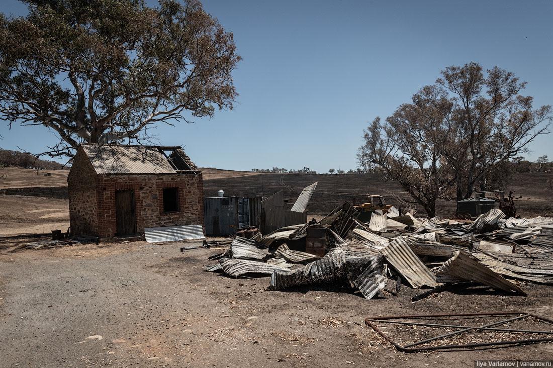 Выжженная земля и трупы животных - фото 33