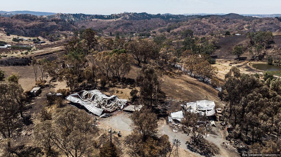 Выжженная земля и трупы животных - фото 34