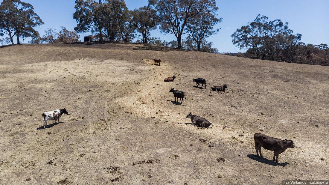 Выжженная земля и трупы животных - фото 35