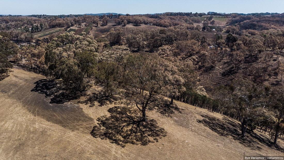 Выжженная земля и трупы животных - фото 37