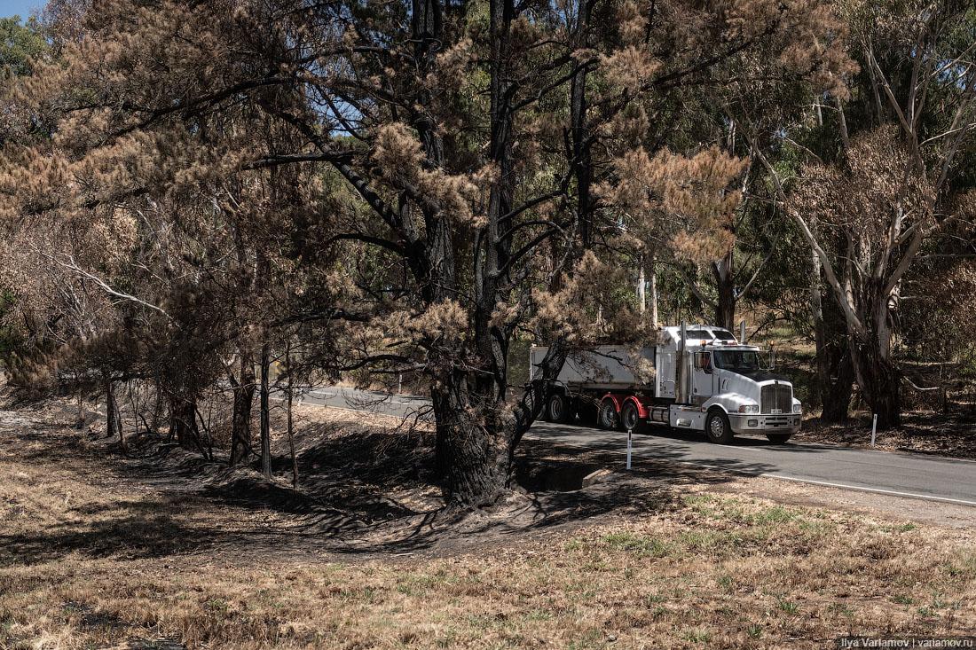 Выжженная земля и трупы животных - фото 41