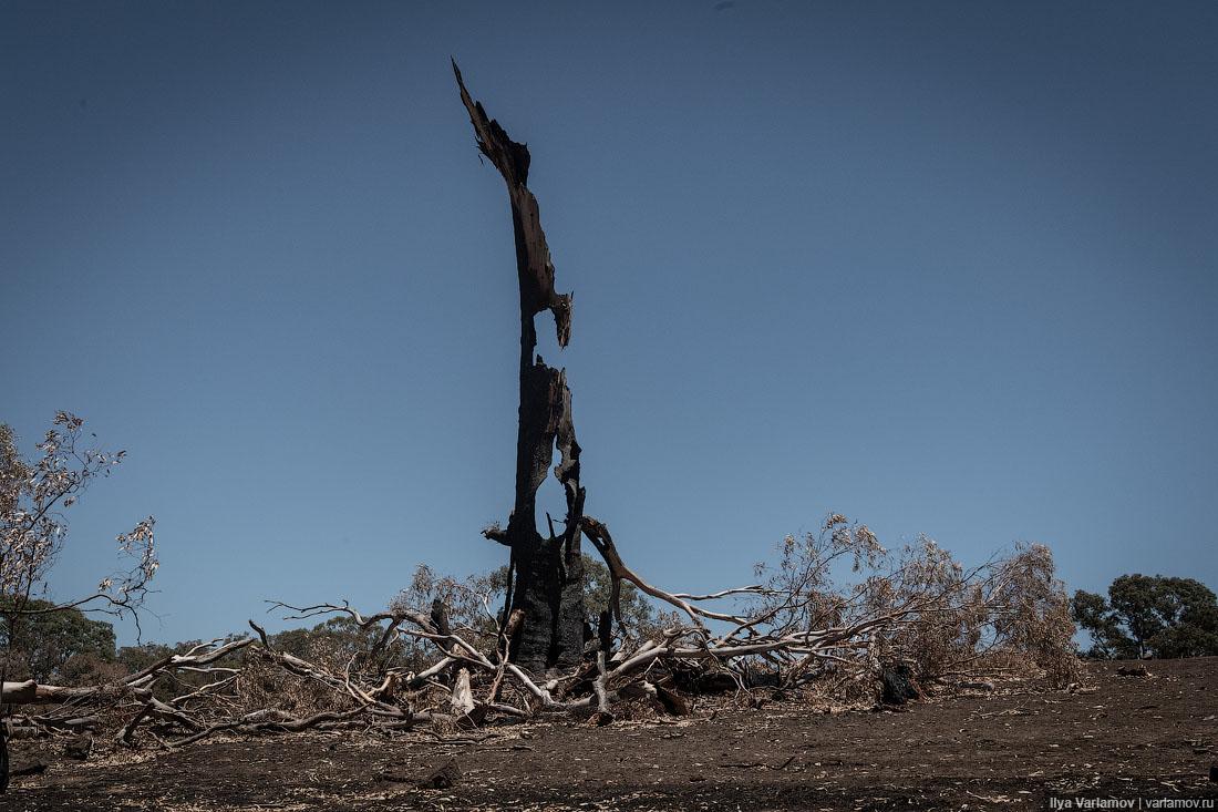 Выжженная земля и трупы животных - фото 43