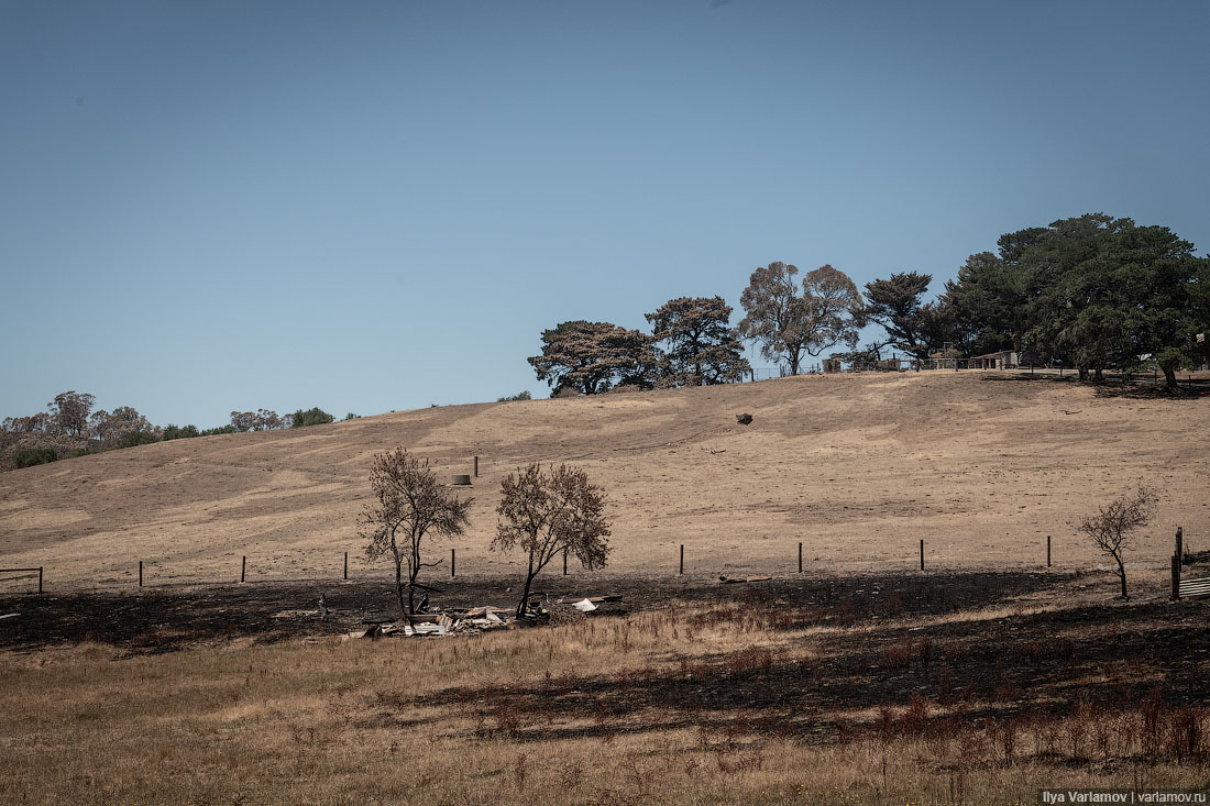 Выжженная земля и трупы животных - фото 52