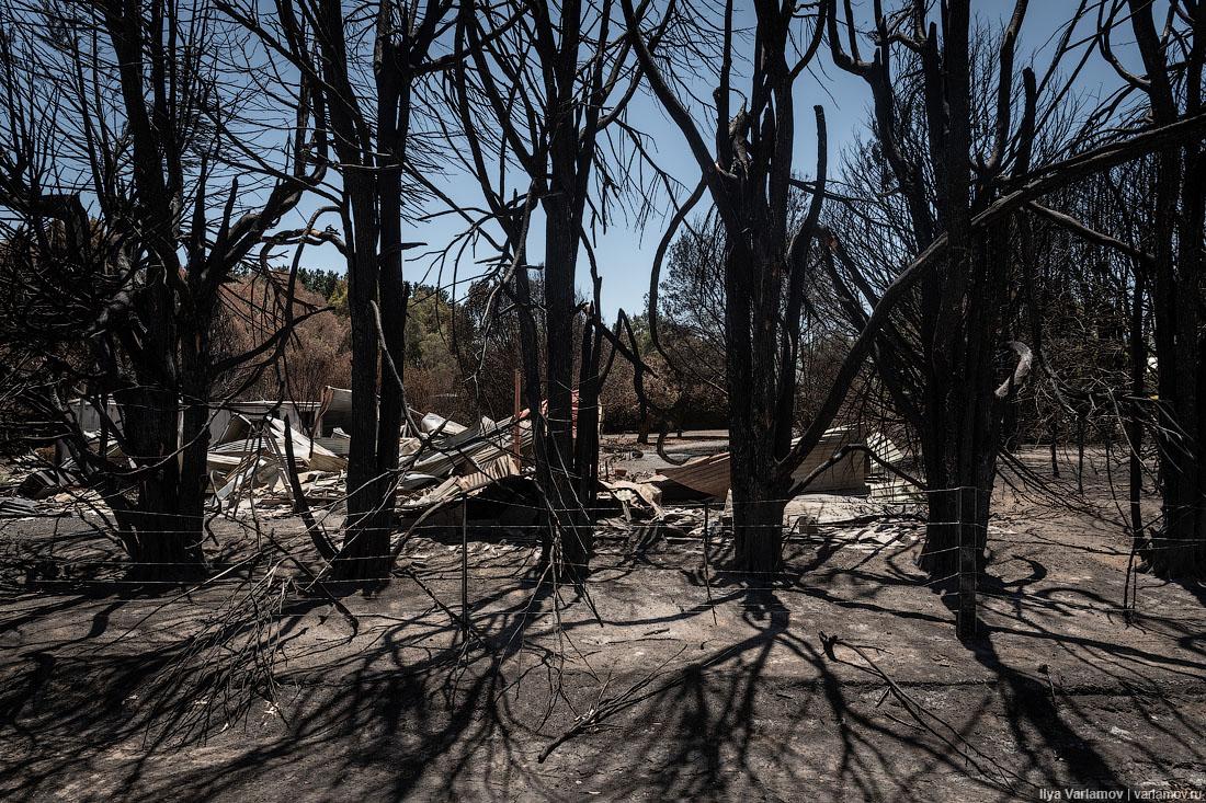 Выжженная земля и трупы животных - фото 59