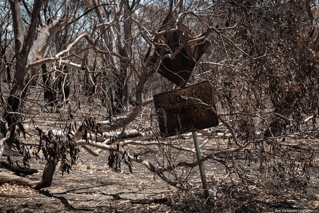 Выжженная земля и трупы животных - фото 60